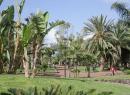 taoro-park-puerto-de-la-cruz_12