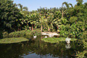 Blick auf den Koi-Teich direkt hinter dem Eingang des Parks.