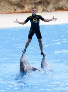 Bei den Shows im Delfinarium sind auch die Trainer mit im Wasser.